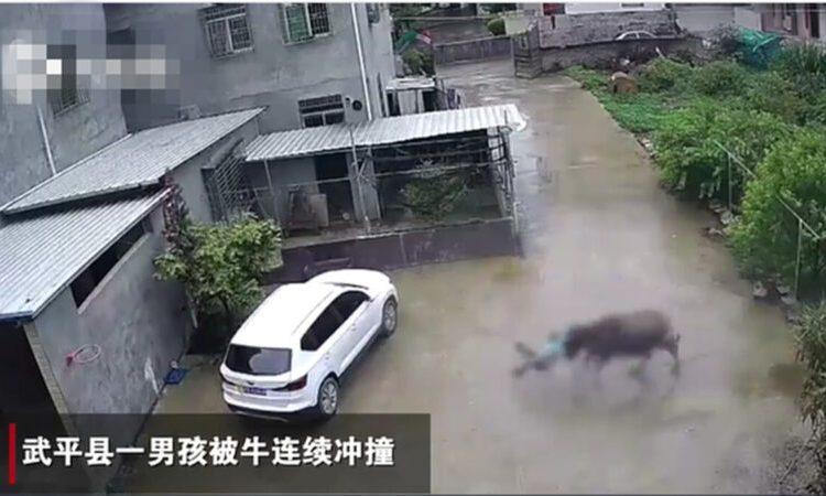 視頻中,一名男孩被水牛連續衝撞。(視頻截圖)
